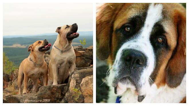 Имена для больших собак