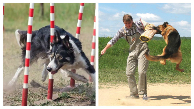 дополнительный команды для дрессировки собак