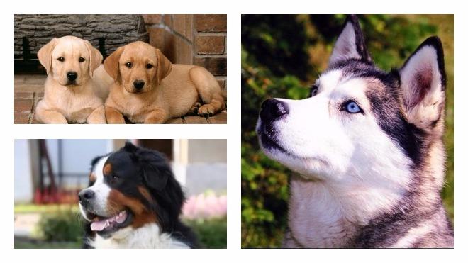 способы проверки собак на бешенство