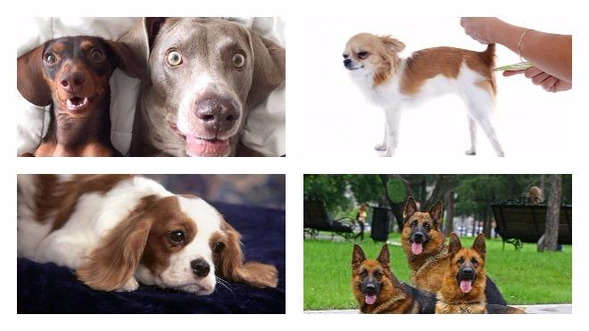 Какова нормальная температура тела у собаки