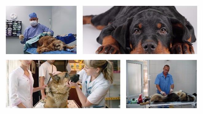 Особенности стерилизации собак