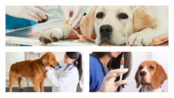 Преимущества стерилизации