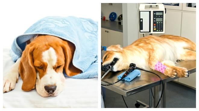 Что вызывает диарею у собак?