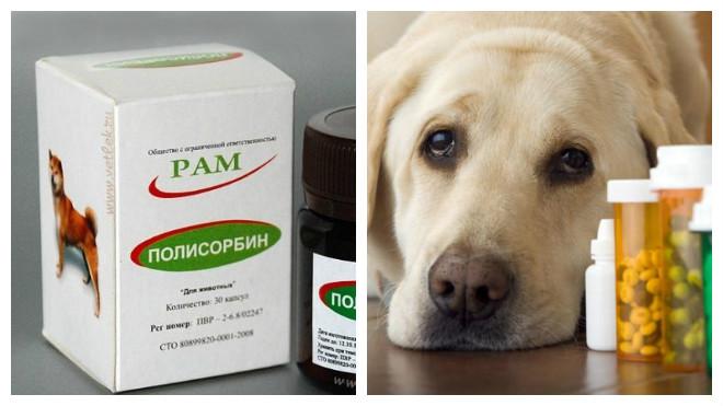 Лекарства при поносе у собак
