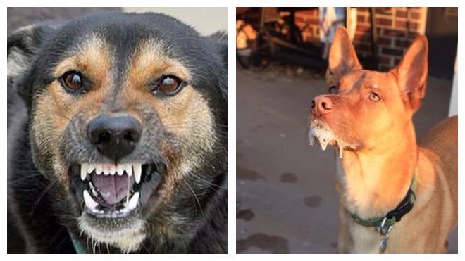 Различные болезни собак