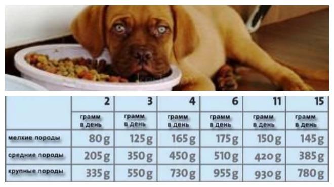 питание двухмесячного щенка