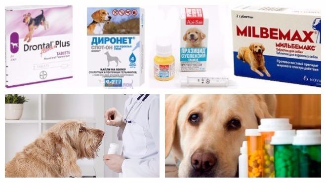 таблетки от глистов для лечения собак