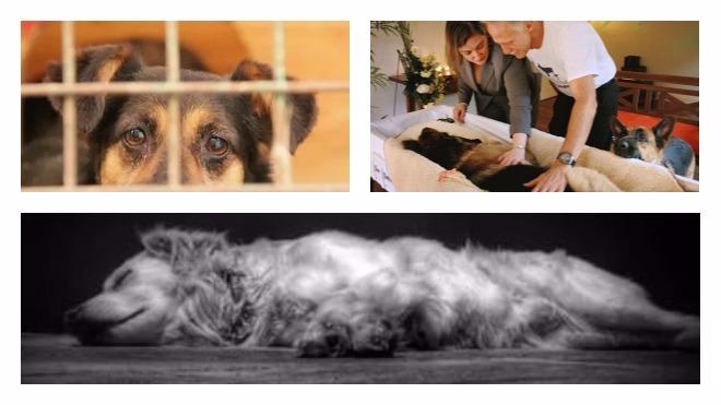 усыпления собаки в домашних условиях