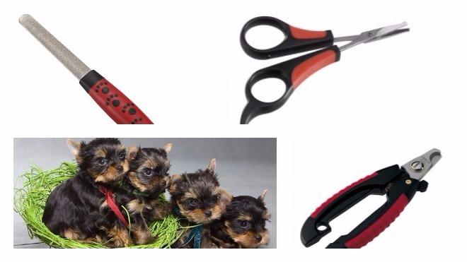 Как правильно подстригать когти собаке