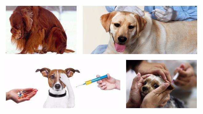 Как можно сделать укол собаке