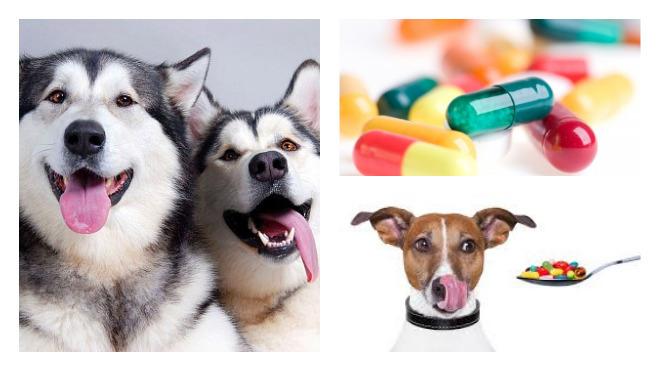 витамины нужные для здоровья собак
