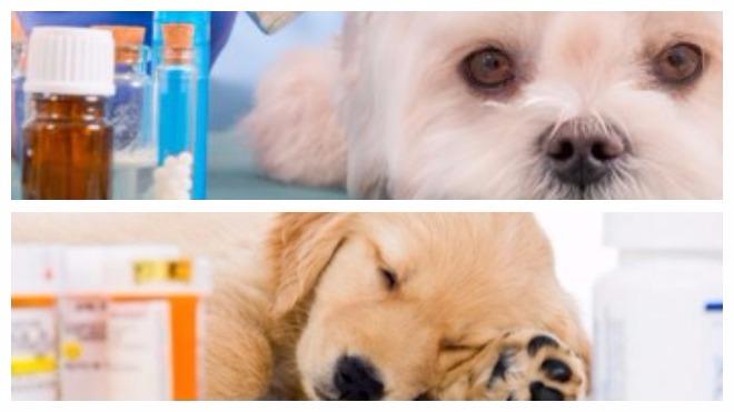 Лечение глистов у собак
