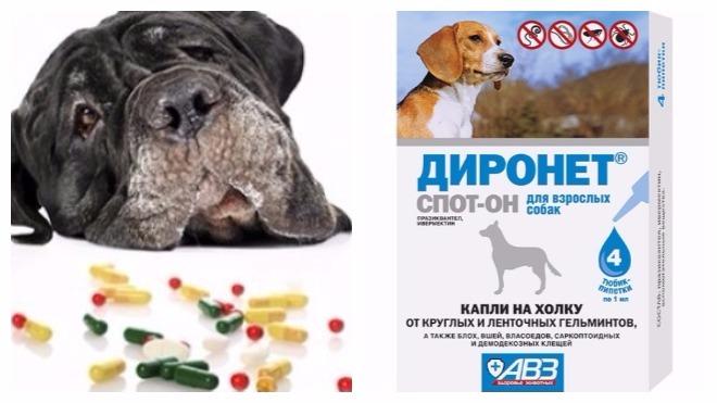 борьбы с глистами у собак