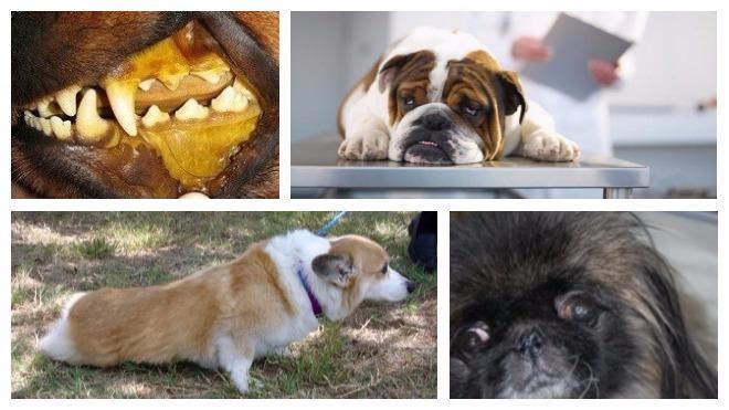 Неинфекционные заболевания собак
