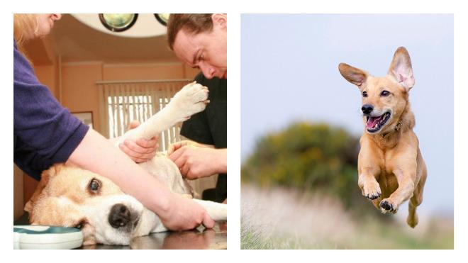 подготовка к кастрации собак