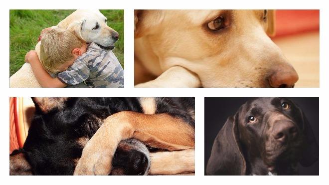 Как правильно усыпить собаку