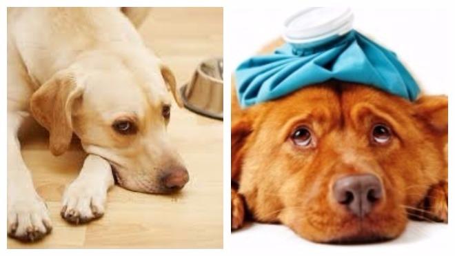 побочные действия при лечение глистов у собак