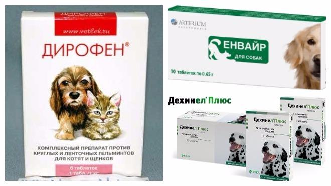 лекарство для лечения гельминтов у собак