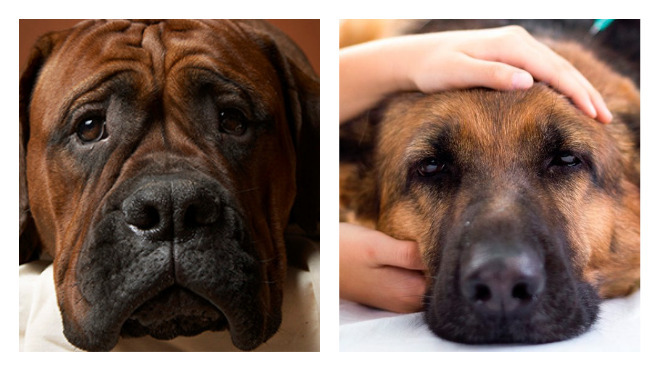 болезни у собак