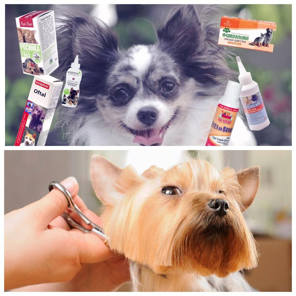 Как ухаживать за собакой - правила и рекомендации
