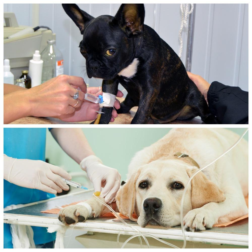 Лечение запора у собаки