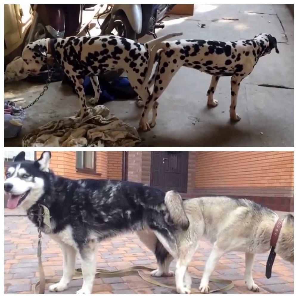 Все про вязку собак – подробности и нюансы