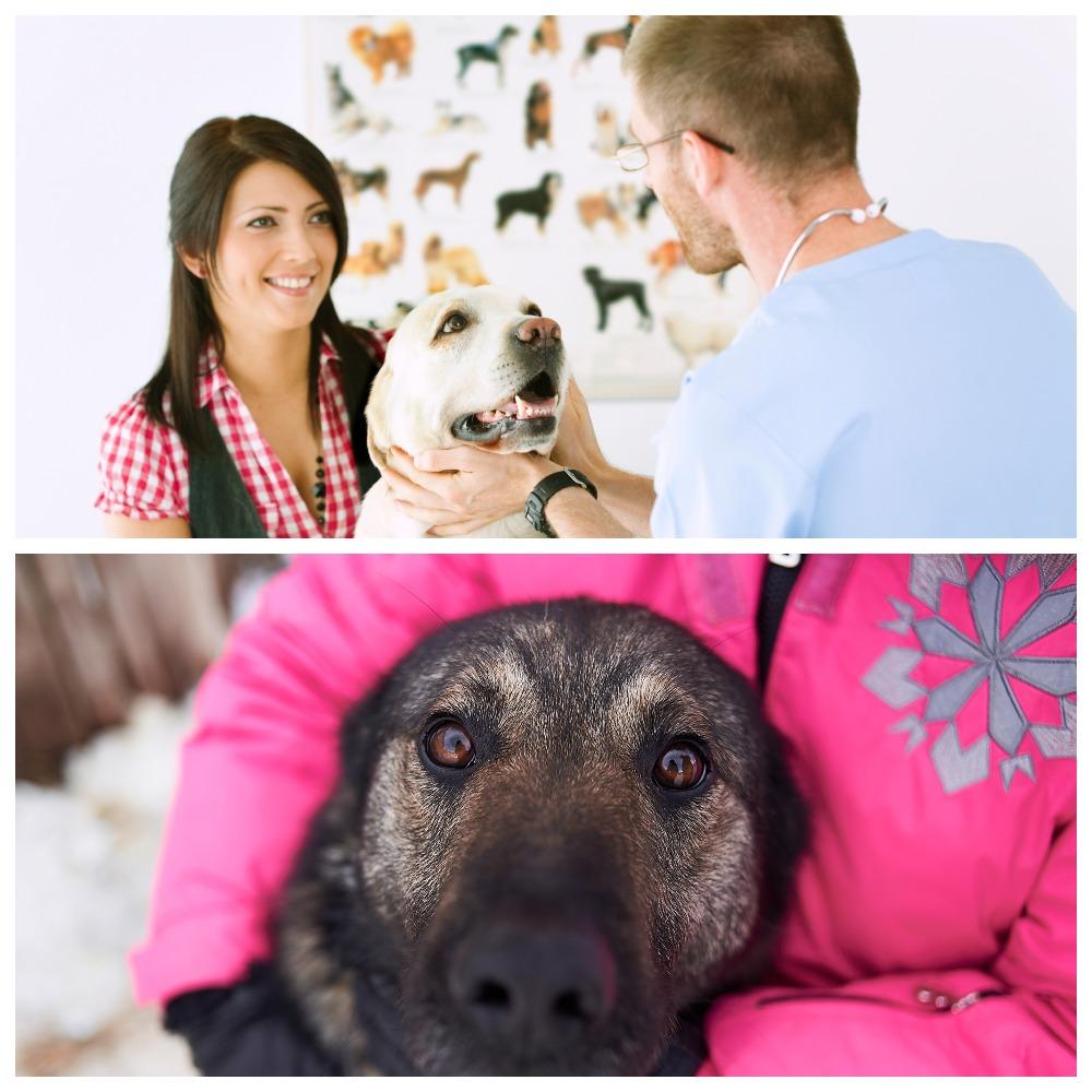 Как лечится и купируется эпилепсия у собак