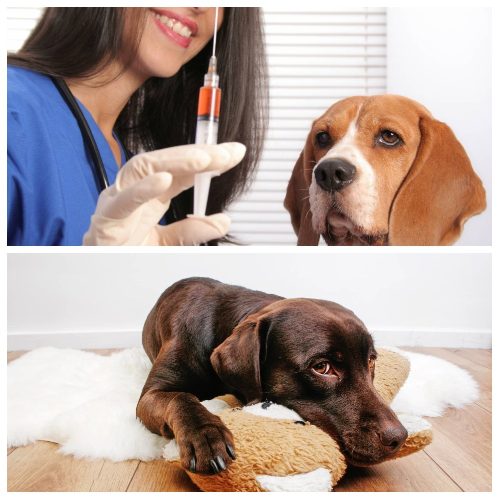 Кашель у собаки - симптоматика и лечение
