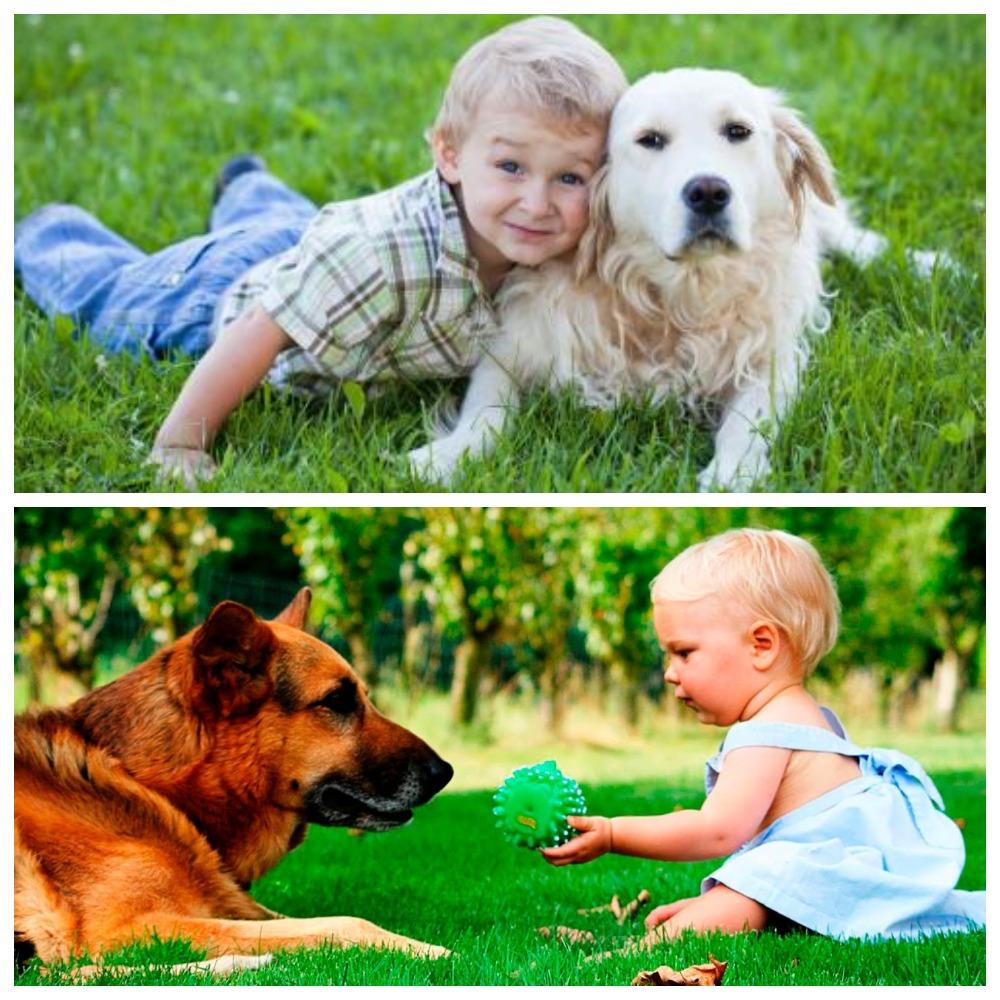 Как определиться с породой собак для детей