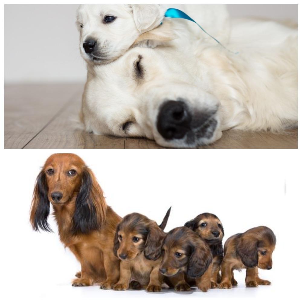 Как проходят роды у собак разных пород