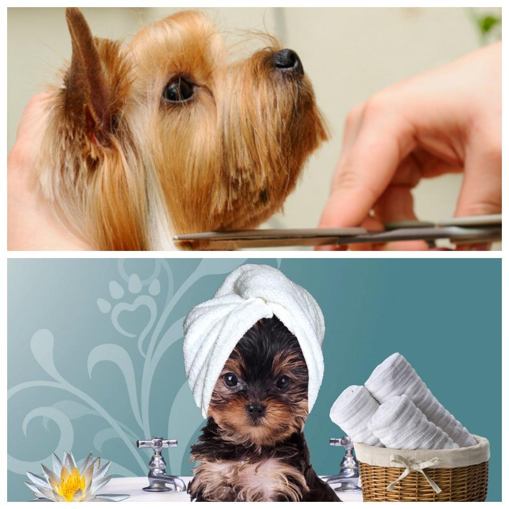 Как подготовиться к стрижке собак?