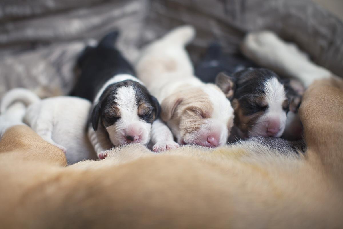 Закрытые глаза у щенков