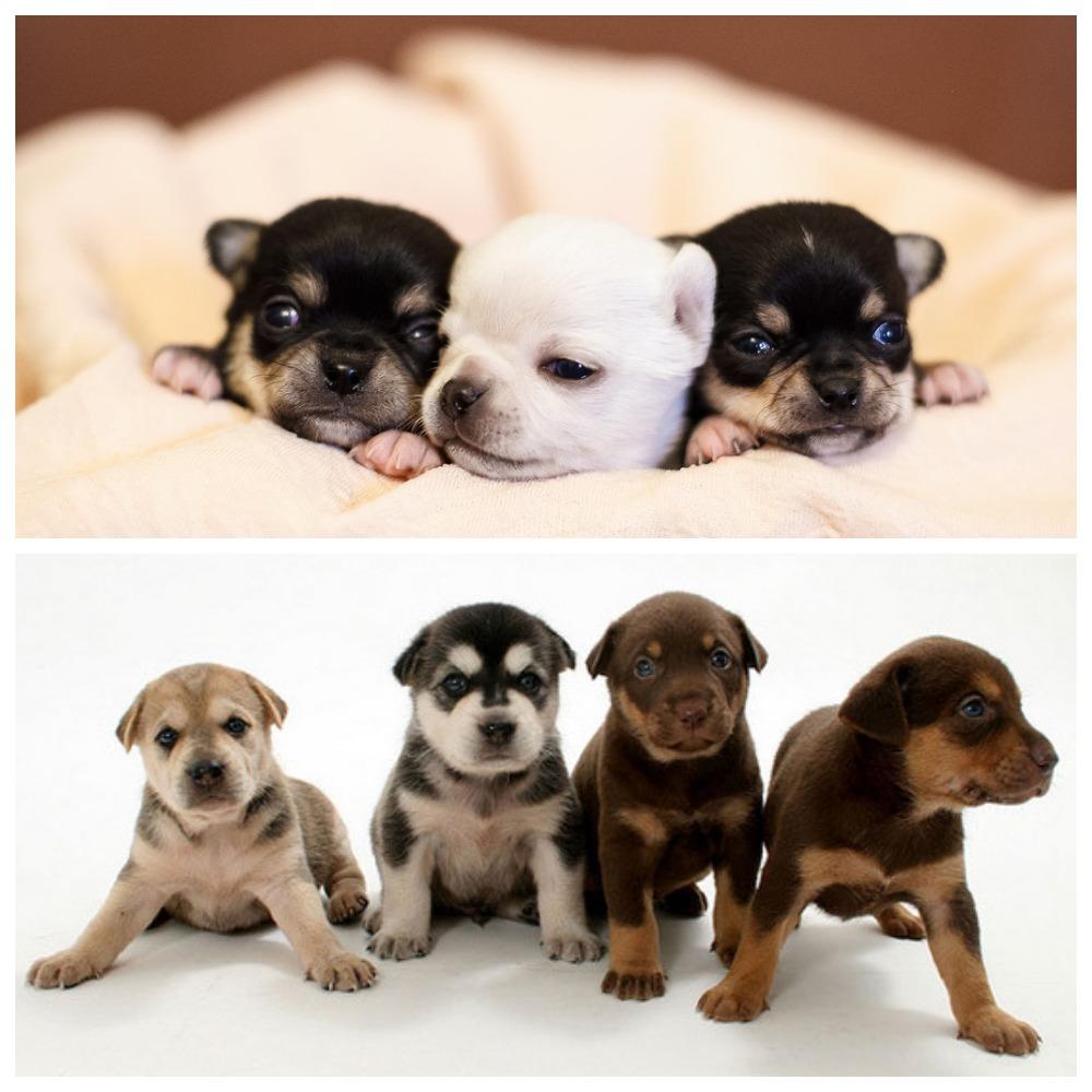 Тонкости, как выбрать щенка