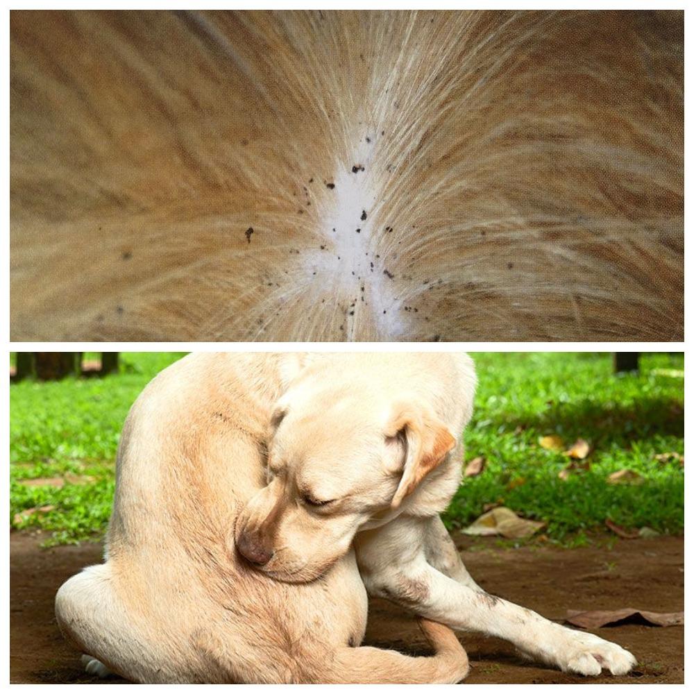 Как выбрать капли от блох для собак