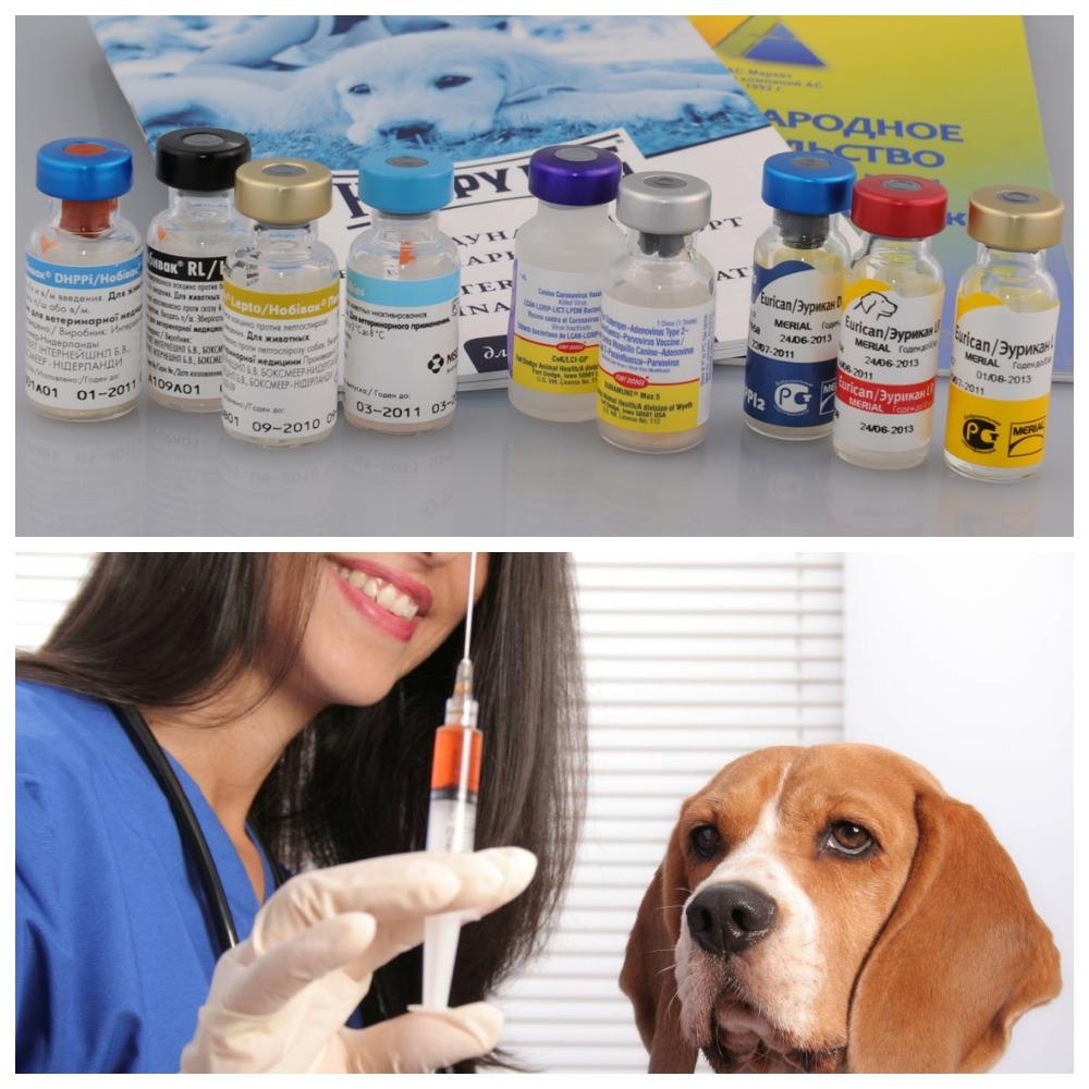 Все о вакцине от бешенства для собак