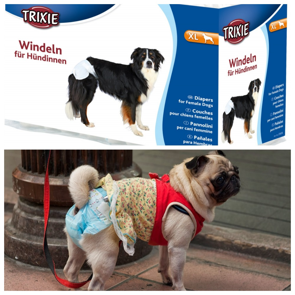 Как выбрать памперс для собаки