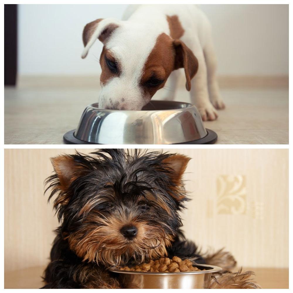 Как подобрать корм для стерилизованных собак