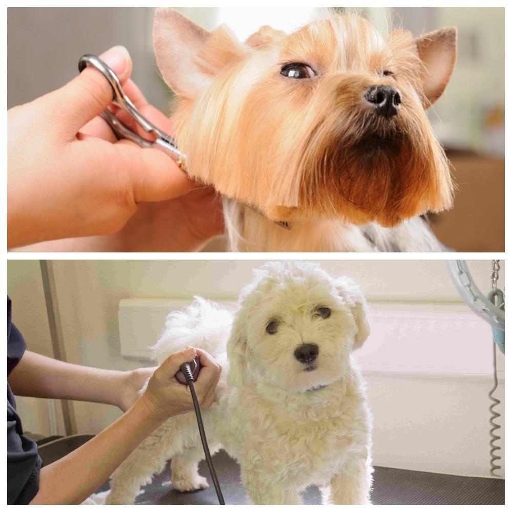 Каким породам собак нужен тримминг и как его проводить