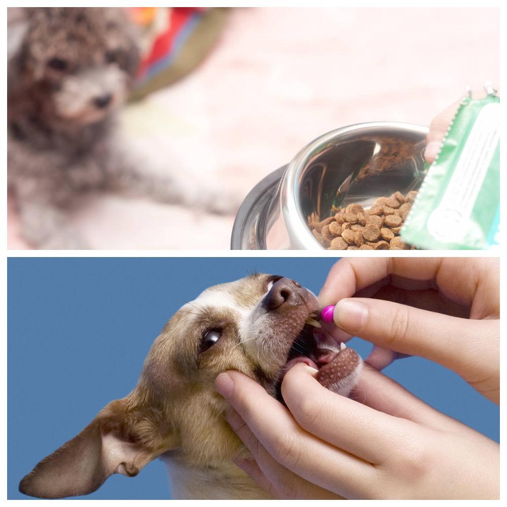 Гастрит у собаки - основные симптомы лечение