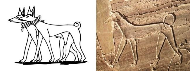 Древнеегипетские борзые Тесем
